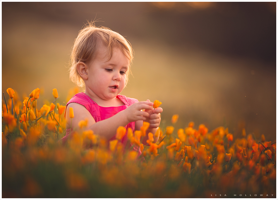 Cute toddler girl wearing a pink dress sits in a field of poppies for her outdoor