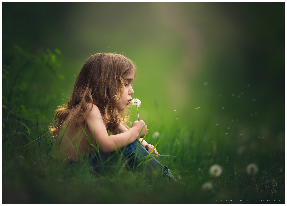 Cute little boy with long curly hair blows the seeds off of a dandelion in