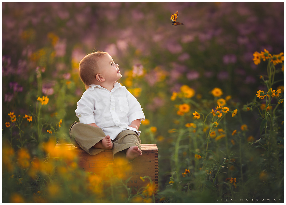 Adorable baby boy watches a butterfly in a field of wildflowers in williams arizona