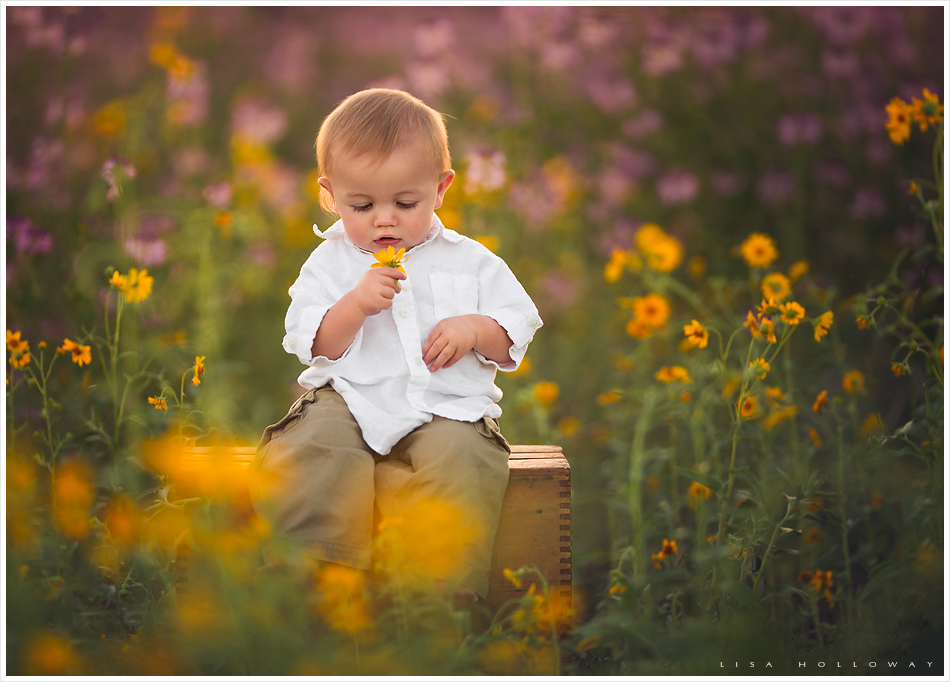 cute baby boy has his picture taken outdoors in a field of wildflowers in williams az