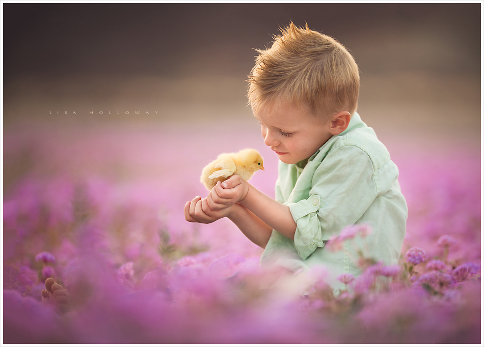 Cute blonde little boy holds a baby chick in a field of pink flowers for a spring portrait outside near Las Vegas. LJHolloway Photography is a Las Vegas Child Photographer.