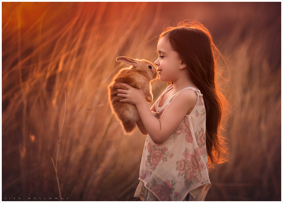 A cute little girl holds a pet bunny in golden grasses outdoors for a portrait